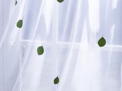 ハウスクリーニングと窓の画像